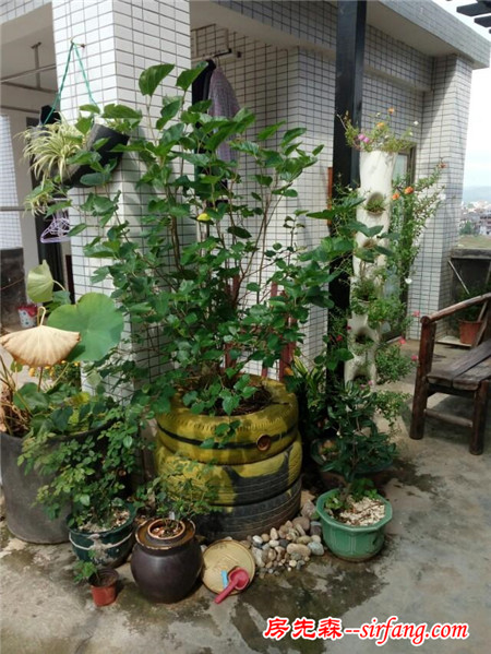 废轮胎和下水管自制的花盆,希望大家会喜欢