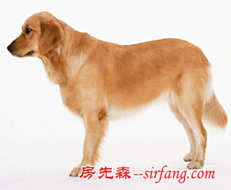 饲养宠物流行 家居风水看你适合养狗吗