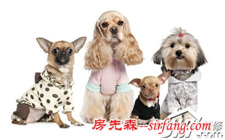 养狗也要看八字 家居风水看你适合养狗吗?