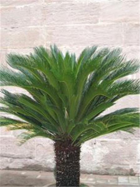 室内污染的克星植物 教你如何净化空气