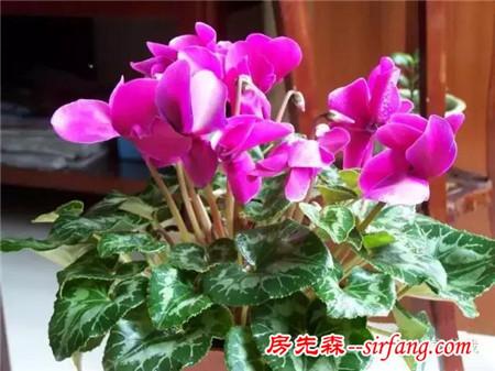冬天了,别以为没花可养,这些花卉故意选在冬季开放!