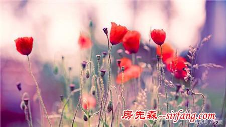 这几种寓意安康长寿的花,是送亲朋好友理想花卉!