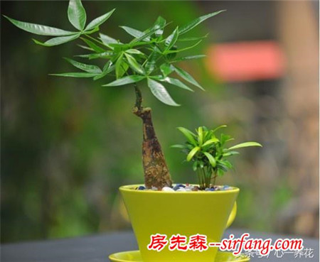 最适合家庭栽种的6种室内植物,好养不怕死!附养护窍门