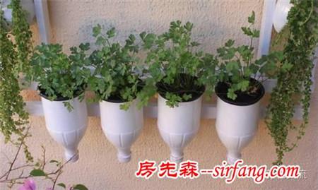 朋友用塑料瓶制作的花盆,花友给上百元都不肯卖
