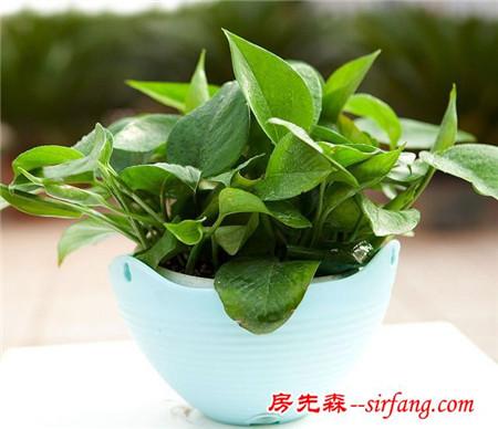 成都室内植物租摆常识详解
