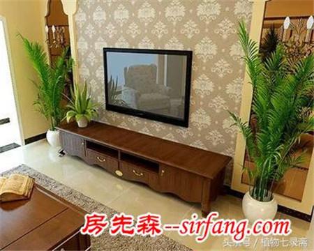 电视机旁摆放花卉,为什么不可取?