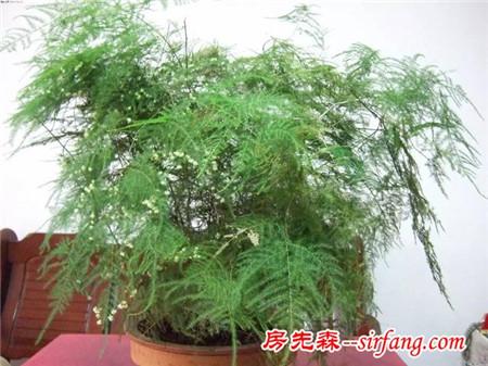 桌面上不可少的10种盆栽,养眼、缓解压力,还能净化空气