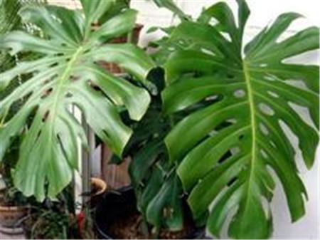 装修时间太重要!附赠室内污染24种克星植物