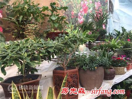 """绿色盆栽""""点亮""""冬季花卉市场"""