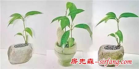 还在买盆栽?几招教你把果核养成清新小盆栽!