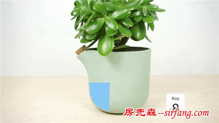 荷兰聪明花盆 植物需要浇水时会告诉你