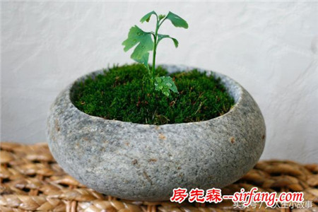 创意石头盆栽,清新别致。水培、多肉再合适不过,喜欢就做一个吧