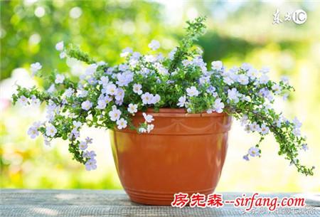 植物叶黄了,怎么办?来听听老园丁总结的七种原因