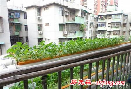 邻居在3平米阳台上种菜养鱼,泥巴都没用,种的菜够全家吃一年!