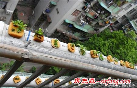 如何在阳台上种菜家庭种菜图片