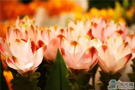 家有这些植物,让你过一个五彩斑斓的冬天!