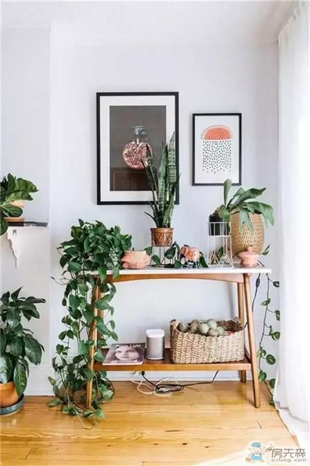 室内装饰这样种绿植,比家里有个后院还强