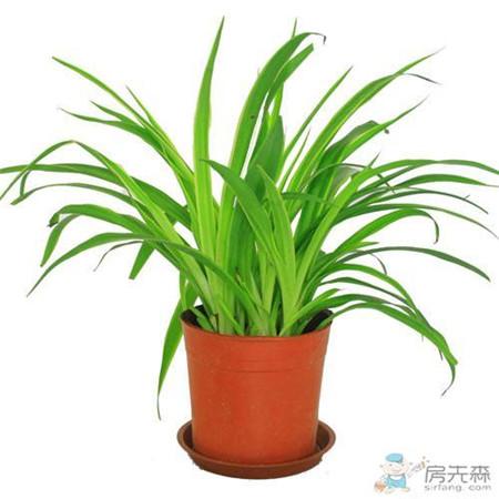 厨房也可以玩小清新 摆放这些植物既好看又好养