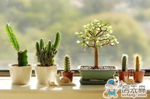 减轻装修污染秋冬室内植物推荐