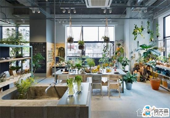 家居植物风水指南 看哪些植物能旺财旺宅