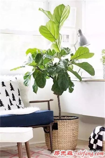 设计师常用来突显高逼格的花草,你家里也需要哦