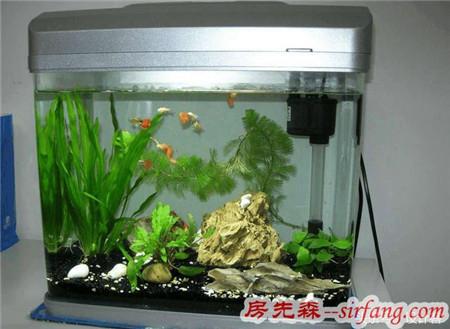 新房装修买了鱼缸应该这样放,我家放错了一直霉运不断!