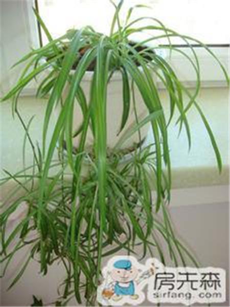 室内摆放植物技巧  这些植物很适合